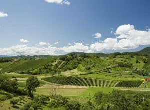 Plešivica – home of Croatian sparkling wines!
