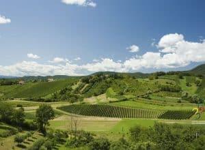 Plešivica – home of Croatian sparkling wines!