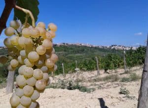 Malvasia Istriana – the only Malvasia that has its own glass!