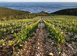 Exceptional Korčula: Zure Winery from Lumbarda