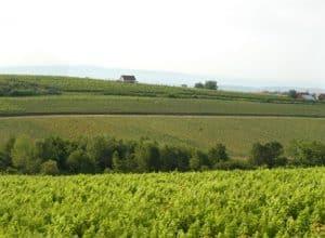 Graševina without limits! First international wine conference about Graševina in Zagreb