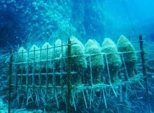A most unusual winery in Croatia – First underwater winery