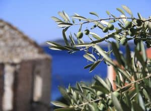 5 things you need to know about Croatian olive oil