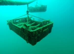 The most amazing wine cellar in the world: Underwater wine cellar in Croatia!