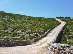 Stone Lace Vineyards in Croatia – Authentic Dalmatia