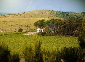 Testament Winery, testimony of old roots and good wines!