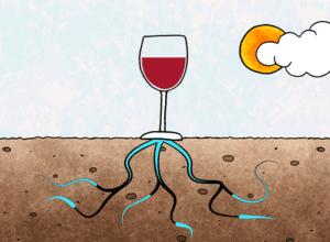 Terroir wines